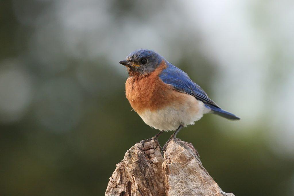 Bird Control Vacaville