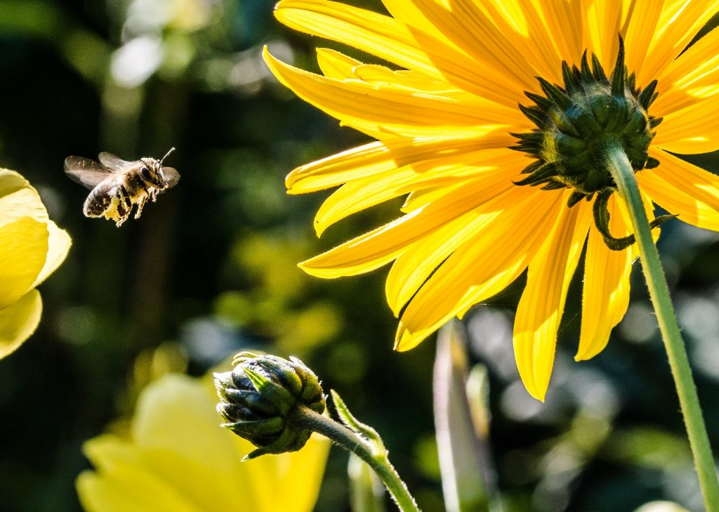 Bee Control Vacaville