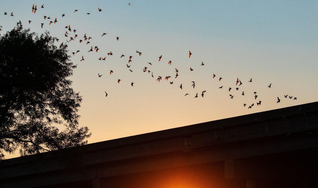 Bat Control Vacaville